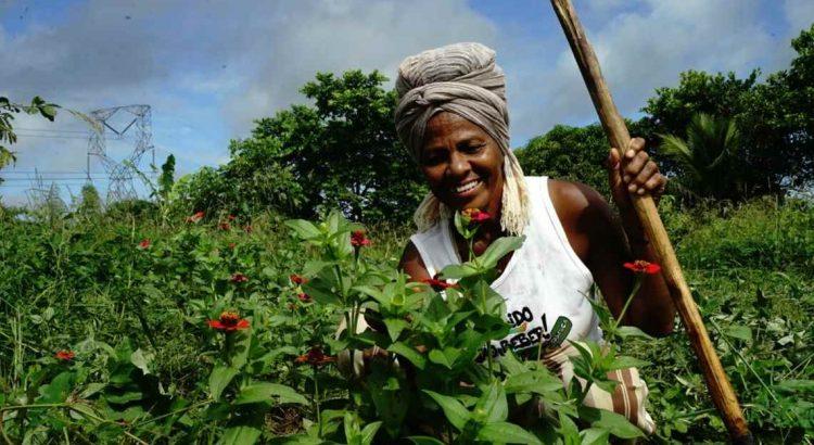 Erradicação da Pobreza: agricultora afroecológica, Luiza Cavalcante defende a agroecologia como possível saída